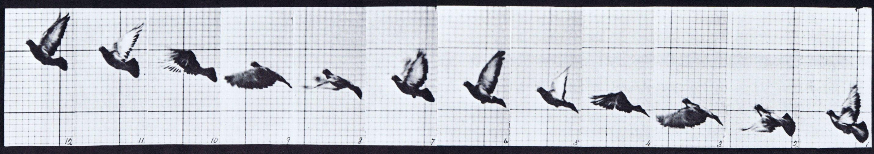 Identifying Similar Images with TensorFlow